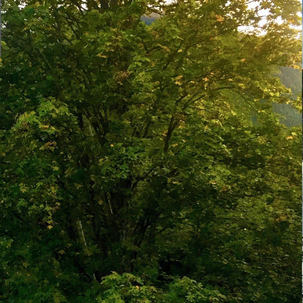 Ferienwohnung, Suite, Appartement, Apartment, Penthouse, Riders Suite, Family Suite, Sky Suite, All.Glemm Suite, Ferienwohnungen Falkenstein, Mountain Homebase, Saalbach, Hinterglemm, Saalbach-Hinterglemm, homeoflässig, 3 Schlafzimmer, am Zwölferkogel, Pfefferweg, Skicircus, Skifahren, Wandern, Biken, MTB, mountainbike, downhill, Luxus, exklusiv, neu, Sauna, Dachterrasse, Panorama, Webcam, Urlaub, Ferien, Austria, Alpen, Lechner, Schwabl, Strebl